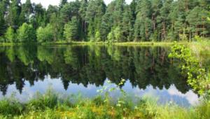 ekosystem leśny