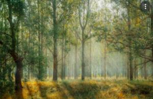 lasy w ekosystemie